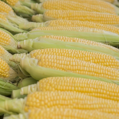 Fresh sweet corn. Fresh Corns in Market. Corn cob between green