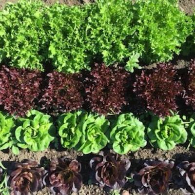 salad-mix